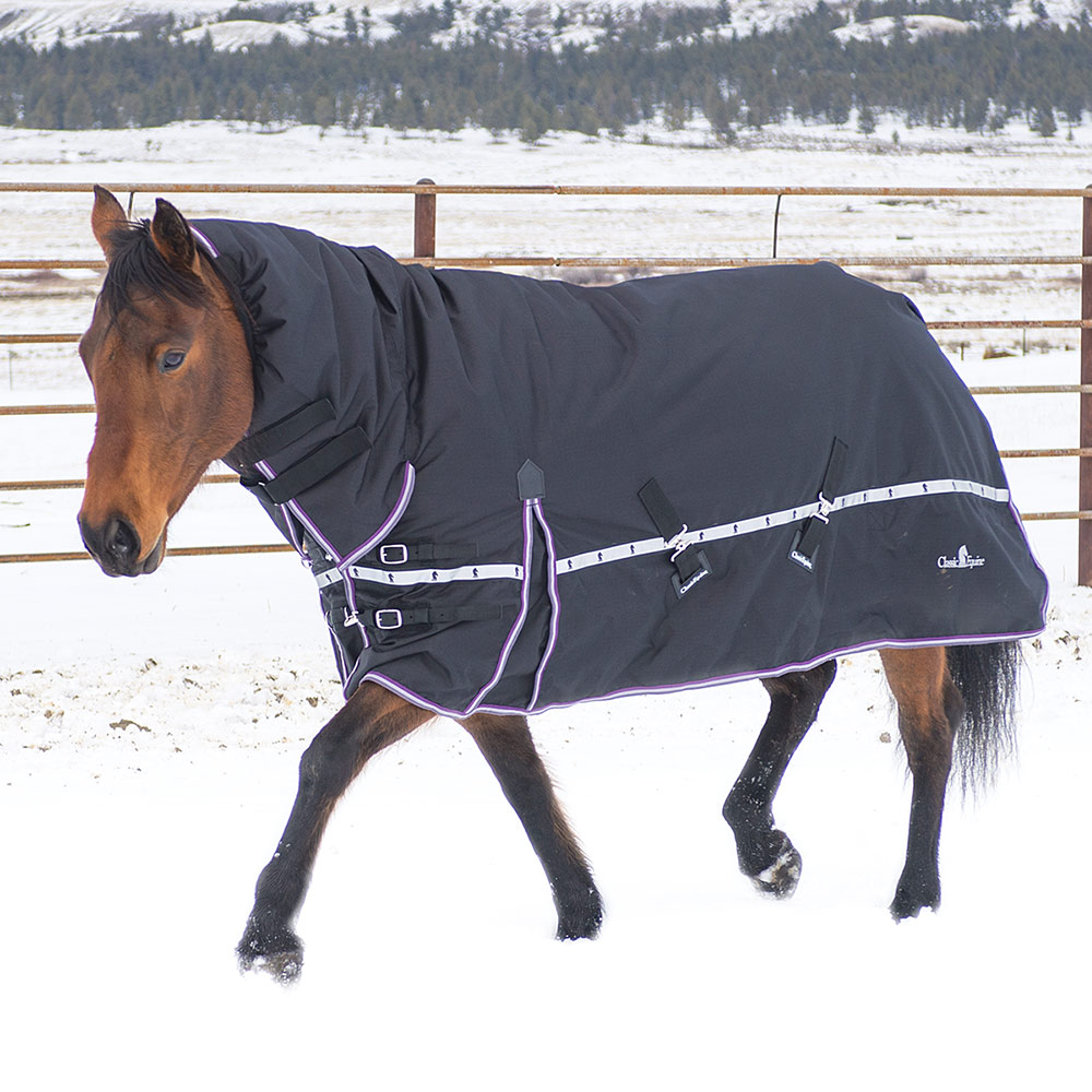 Winter Horse Blankets >> 10k Cross Trainer Turnout Winter Horse Blanket With Hood
